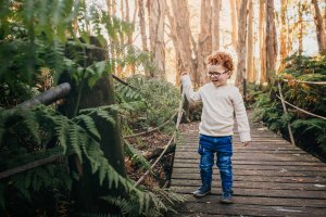 A little boy explores the ferns on a rainforest boardwalk